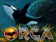 Приключения на деньги в автомате Orca
