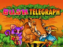 Азартная игра для членов клуба Русский Вулкан Лесной Телеграф