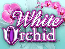 Игровой аппарат White Orchid